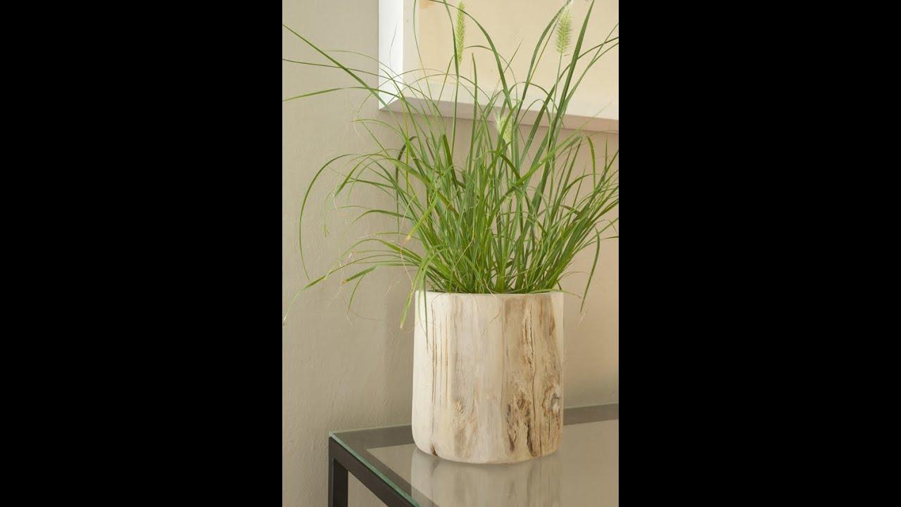 pflanzen in szene setzen und sch n dekorieren bert pfe aus holz teakwurzel varia living. Black Bedroom Furniture Sets. Home Design Ideas