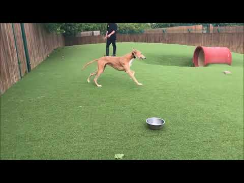 Dogs Trust Harefield - Gary