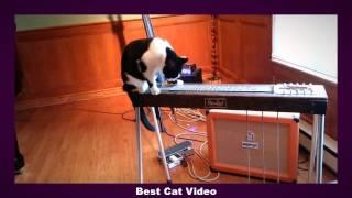 Самые умные коты. Подборка Часть1