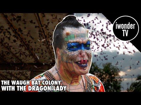 Tiamat The Dragon Lady Visits Houston Texas Bat Colony