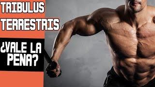 TRIBULUS TERRESTRIS: ¿Testosterona natural elevada? [Científicamente comprobado]
