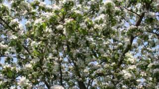 Der Apfelbaum - Christian Franke Dance Mix