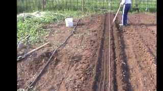 Увеличение плодородия почвы с минимальными материальными затратами на грядках по Миттлайдеру(На этом видео показано как можно увеличить плодородие почвы с минимальными материальными затратами,котор..., 2014-10-20T07:17:14.000Z)