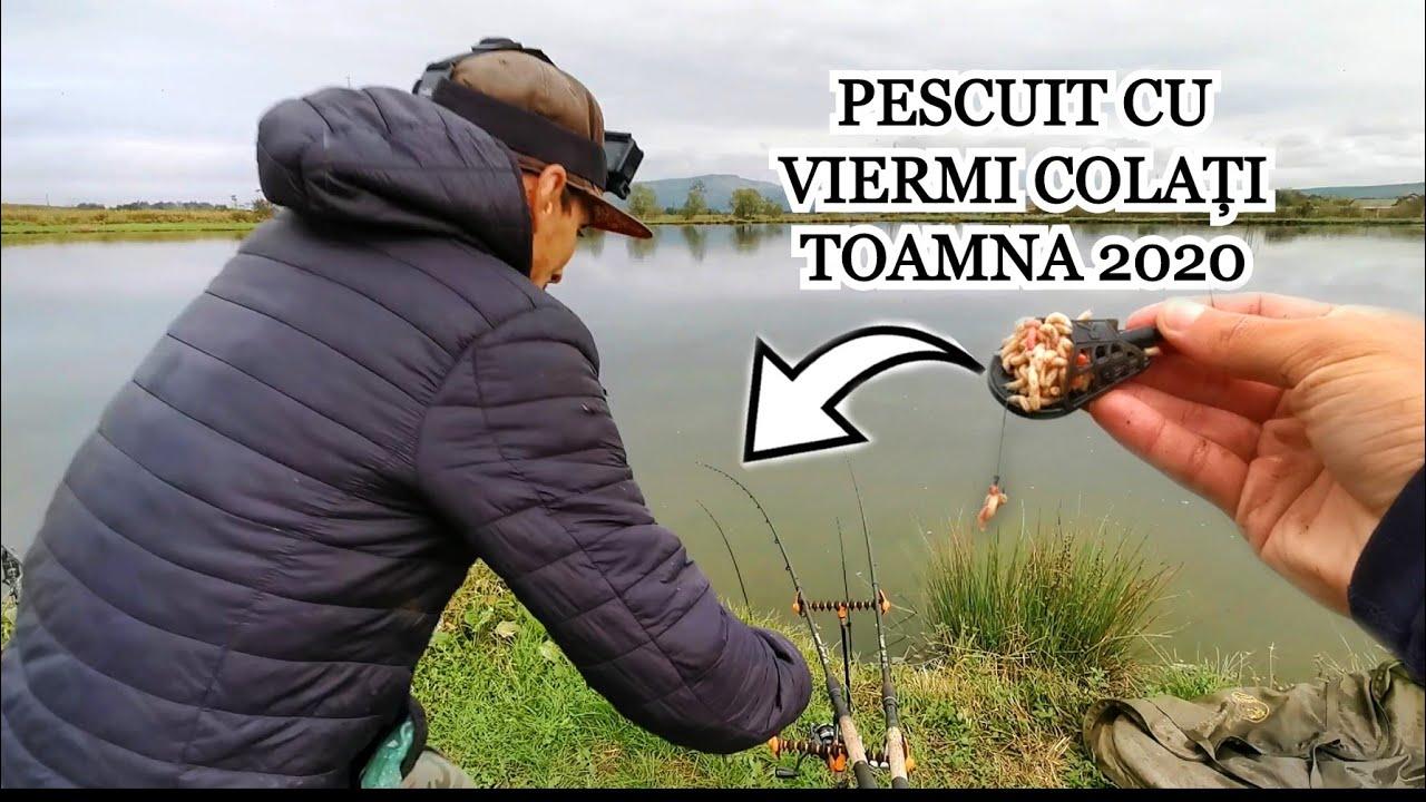 Pescuit CU VIERMI COLAȚI - CRAP și CARAS La Feeder
