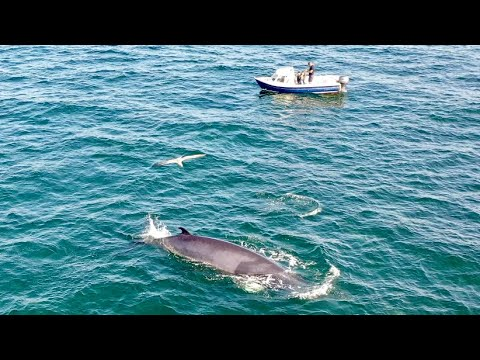 Sea Fishing UK - AMAZING Whale And Dolphin Footage - Small Boat Fishing - Bass, Pollack