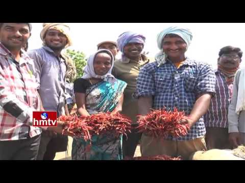 Guntur Red Chilli Farmers Gain Huge Profits Using Online Methods | Nela Thalli | HMTV