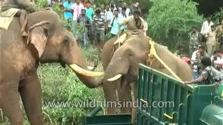Elephant rescue goes awry - pachyderm dies during trans-location in India