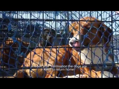 Stérilisation et vaccination de chats et chiens au Maroc