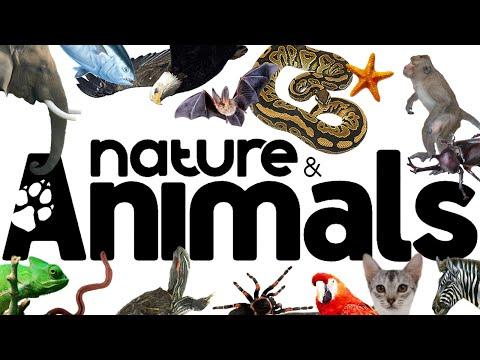 "Zoosparkle - Recensione rivista ""Nature & Animals"""