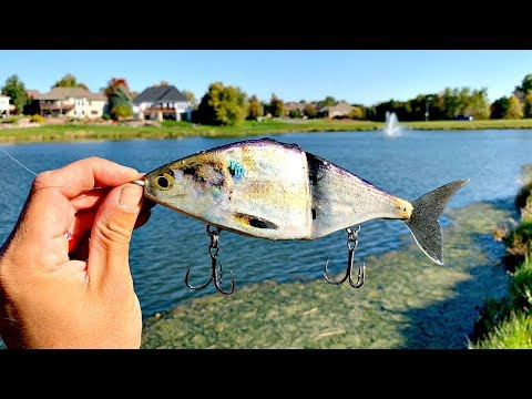 Making A Shad Glide-Bait From A REAL FISH!!! (IT WORKED)