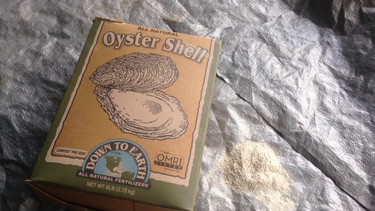 Oyster She Ll Flour Why It Is Important In A Plants Growth And