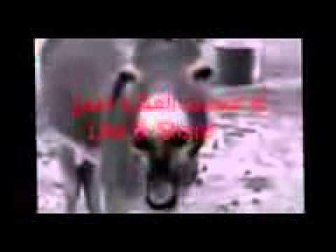 المشهد المحذوف من فيلم هيفاء وهبي   حلاوة روح