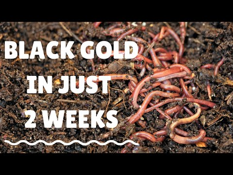 """Simple way to get """"black gold"""" in just 2 weeks using worms!"""