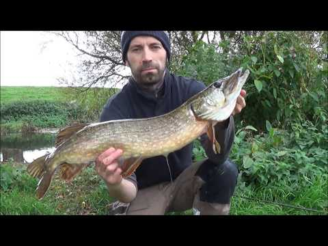 Pike Fishing On The River Dearne, Oct 2017