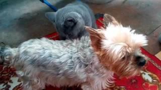 Самое няшное видео ютуба! Кошка лижет собаку!