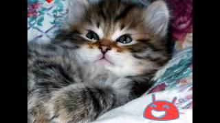 ❇классные котята!❇