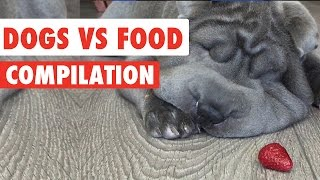 Dogs Vs Food Video Compilation 2016
