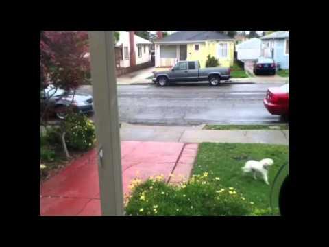 San Leandro, California 'Stray Dog Sighted'
