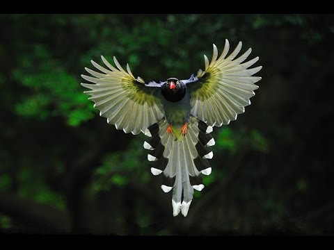 Экзотика Животные мира Скрытая от глаз природа Таиланд Страна контрастов Самая тёплая Ночная жизнь - Прикольное видео онлайн