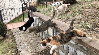Parkour Cats in Slow Motion!!