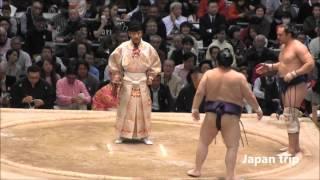 阿夢露 vs 明瀬山の取組。 2016大相撲春場所6日目。