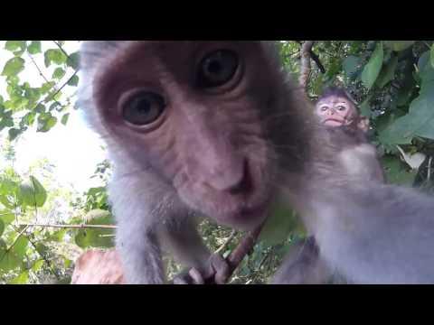 SIGA Present : GoPro Exploring Bali Indonesia