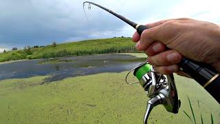 В этом БОЛОТЕ оказалось много ЩУКИ Ловля щуки на спиннинг в заросшем болоте