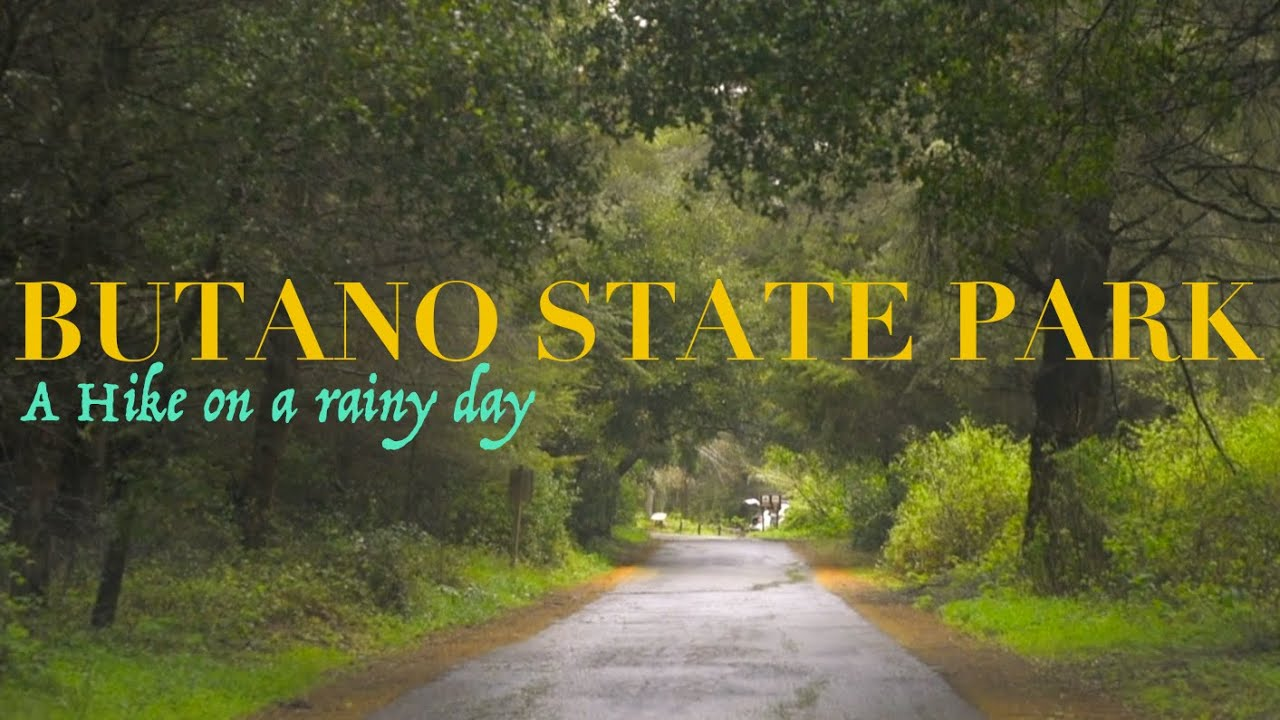 Download Butano State Park - A hike on a rainy day (Nikon D810)