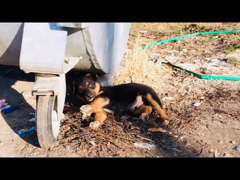 Rescued puppy beside Dumpster