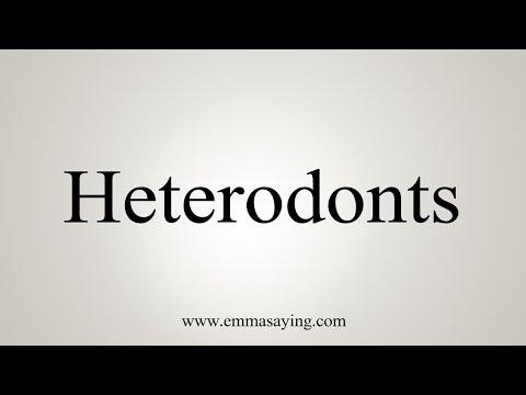 How To Pronounce Heterodonts