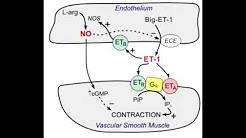 Bosentan - Endothelin blocker