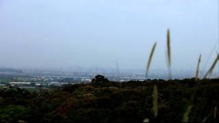 2009年3月28日台灣彰化八卦山灰面鵟鷹gray-faced Buzzard-eagle荔枝林で休むサシバ
