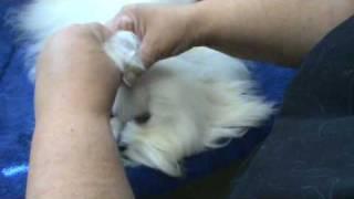 grooming finale