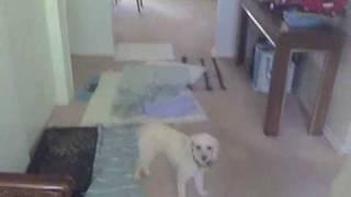 Jackie 'dog Whisperer'