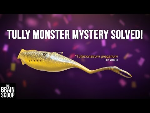 Tully monster mystery SOLVED!
