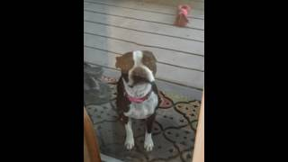 MuffinNOLA-Cant potty in the rain-