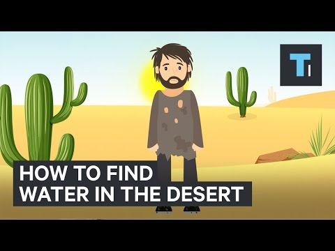 Thumbnail: Here's how to find water if you're ever stuck in the desert