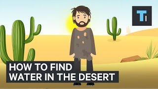 heres how to find water if youre ever stuck in the desert