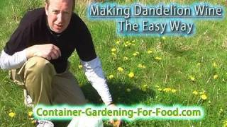 Natures Bounty - Making Dandelion Wine The Easy Way