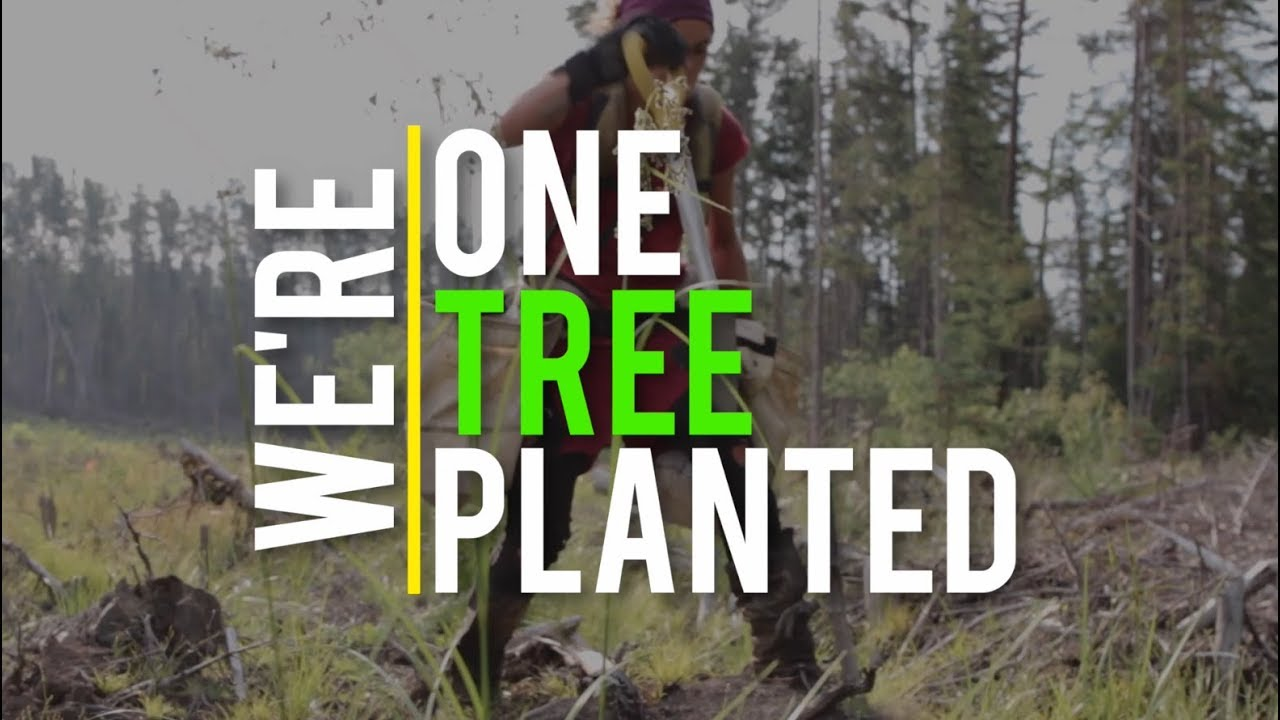 One Tree Planted | Supporting Global Reforestation: One Dollar, One Tree