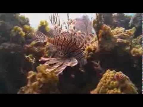 Preview: Scourge Of The Lionfish
