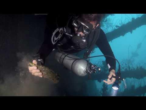 Diving Vanuatu - SS President Coolidge - Gauntlet Dive