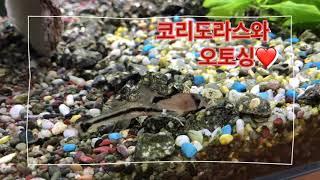 구피키우기 / 코리도라스 / 팬더코리 / 메타에코리 /…