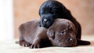 Самые милые щеночки в мире! Самые красивые фото!