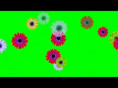 Flowers Falling Green Screen  Free Effects 2018 thumbnail