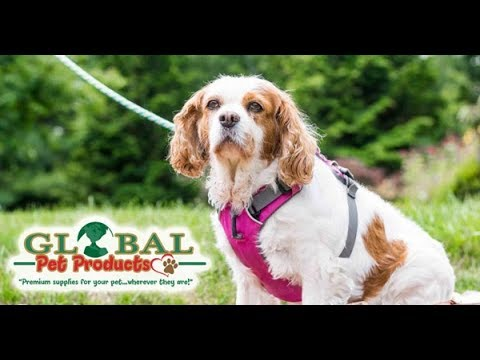 Online Dog Store The Very Best Pet Supplies & Products With Free Shipping