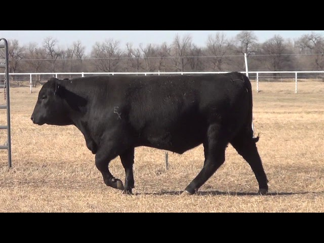 Express Ranches Lot 47
