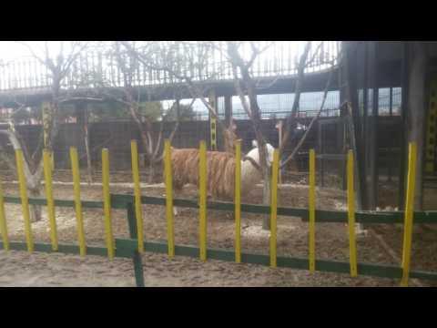 Kopshti zoologjik Prizren