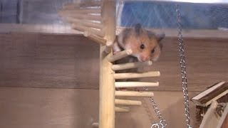 The Hamster Compound #5 Stuck thumbnail