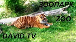 Зоопарк в Германии.Часть 1.Видео для детей.Zoo Osnabrück(Привет, друзья! Меня зовут Давид и это мой канал про игрушки! Сегодня я отправился с мамой и папой в зоопарк!..., 2015-10-29T19:23:30.000Z)